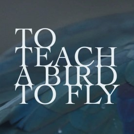 To Teach a Bird to Fly – Documentary-Fiction